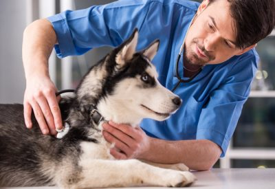 Veterinary jobs in Canada